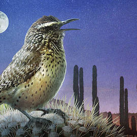 First Light Singing Cactus Wren by R christopher Vest