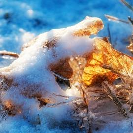 First Snow, Leaves and Light by Tatiana Travelways