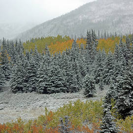 First Snowfall in Denali by Connie Fox