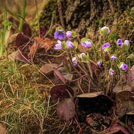 First Woodland Spring Flowers by Trey Foerster