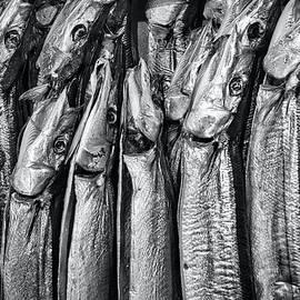 Fish at the Kushiro Market - Japan by Stuart Litoff