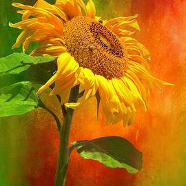 Flaming Sunflower by Christina Ford