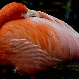 Flamingo at Rest by Richard Bryce and Family