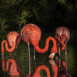 Flamingo Calm Reflections by Liesl Walsh
