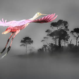 Flash of Pink by Donna Kennedy