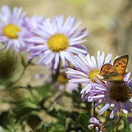 Fleabane and Local Resident by Daniel Stanley