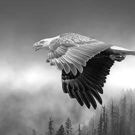Flight In Black and White by Joy McAdams
