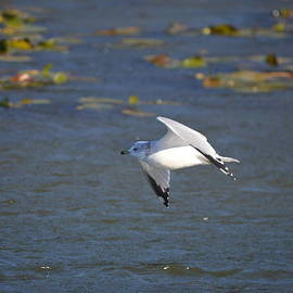 Flight Over the Marsh by Chris Bartley