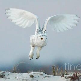 Flyng B-Sn 012 by Wei Tang