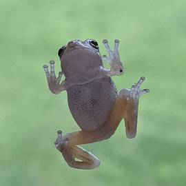 Floating Frog  by Kate Tidwell