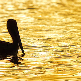 Floating in gold by Tatiana Travelways