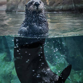 Floating Otter - Vertical by Patti Deters