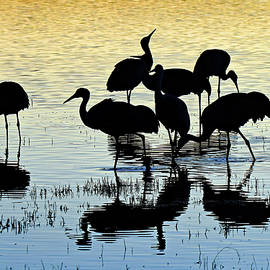 Flock Of Cranes At Bosque by Jennifer Robin