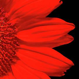 Florabundance by Susan Maxwell Schmidt