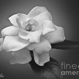 Floral Beauty by Carol F Austin