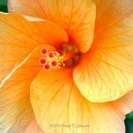 Floral swirls by Sonali Gangane