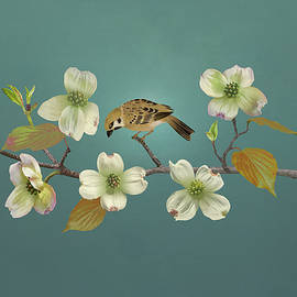 Florida Dogwood and Sparrow by Spadecaller