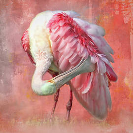 Florida Roseate Preening by HH Photography of Florida