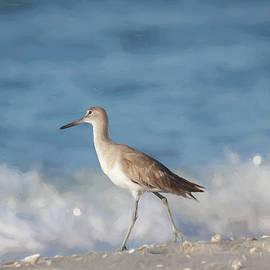 Florida Sandpiper by Kim Hojnacki