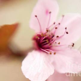 Flower-0129CN by Timothy Bischoff