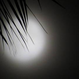 Flower Blood Moon In the Haze by Adrienne Wilson