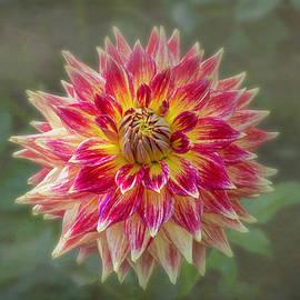 Flower in the Fog by Sandi Kroll