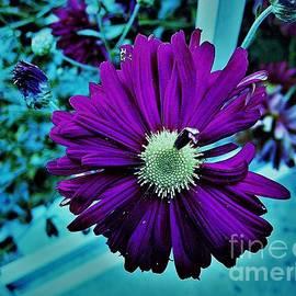 Flower Pots by Shelly Wiseberg