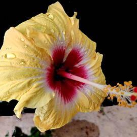 Flower Study-a by Anand Swaroop Manchiraju