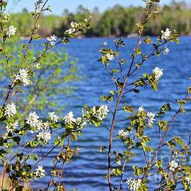 Flowering Bush Spring in Minnesota by Ann Brown