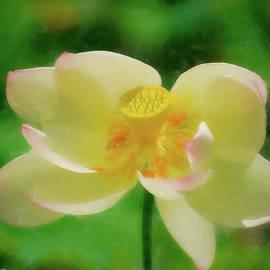 Flowering Lotus by Kathi Isserman