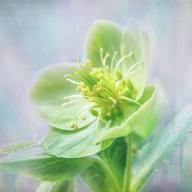Flowering Green by Terry Davis