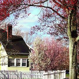 Flowering Trees in Spring by Susan Savad