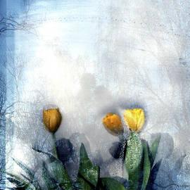 Flowers behind a Window by Imi Koetz