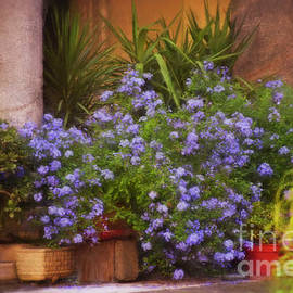 Flowers in the Courtyard by Mary Machare
