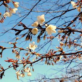 Flowers in the Sky by Nancy Kane Chapman