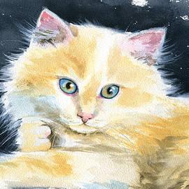 Fluffy Ginger Kitten  by Dora Hathazi Mendes