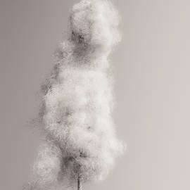Fluff by Wim Lanclus