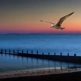 Fly Away by Chris Boulton