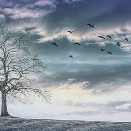 Fly Away in the Cool Blue of the Evening by Debra and Dave Vanderlaan