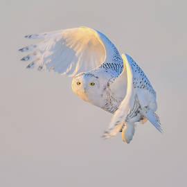 Flying   B-Sn 006 by Wei Tang