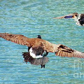 Flying Birds by Atiqur Rahman