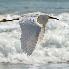 Flying Egret at the Shore by Bruce Frye
