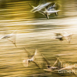 Flying seagulls - abstract by Lyl Dil Creations
