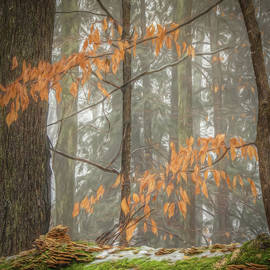 Fog and Fungus by Trey Foerster
