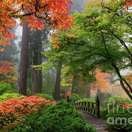 Foggy Autumn Morning Overlooking Moon Bridge In Portland Japanese Garden by Tom Schwabel