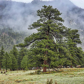 Foggy Day In RMNP by Lorraine Baum