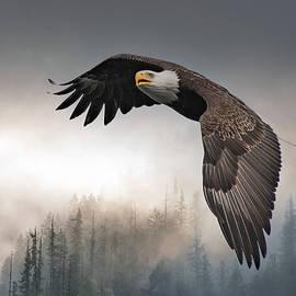 Foggy Flight- Eagle