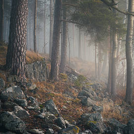 Foggy forest landscape by Juhani Viitanen