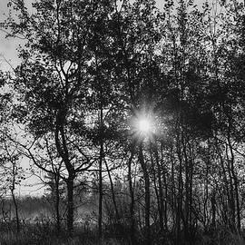 Foggy Morning Daybreak by Sue Capuano