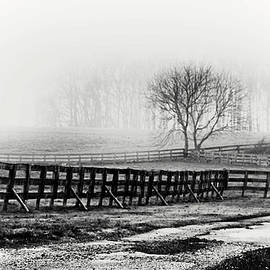 Foggy Morning in Chester County Monochrome by Susan Maxwell Schmidt